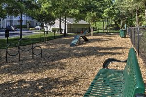 Dog Friendly Parks In Lexington Nc
