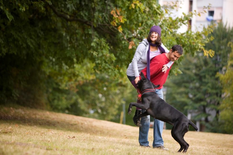 Creating Pet-Friendly Amenities For Homeowners and Residents